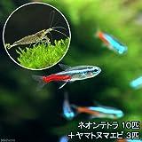 charm(チャーム) (熱帯魚)ネオンテトラ(10匹) +ヤマトヌマエビ(3匹) 【生体】