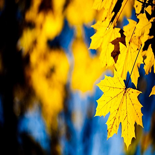 keep-on-pursuing