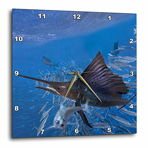 3dRose Indopacific Sailfish Attacking Sardines, Isla Mujeres, Mexico Wall Clock, 10