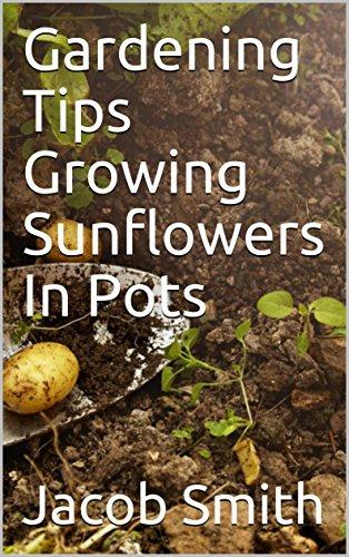 Gardening Tips Growing Sunflowers In Pots -