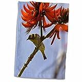 3dRose Danita Delimont - Birds - Japanese White-eye bird, Hawaii - US12 RBE0003 - Ralph H. Bendjebar - 12x18 Hand Towel (twl_89857_1)