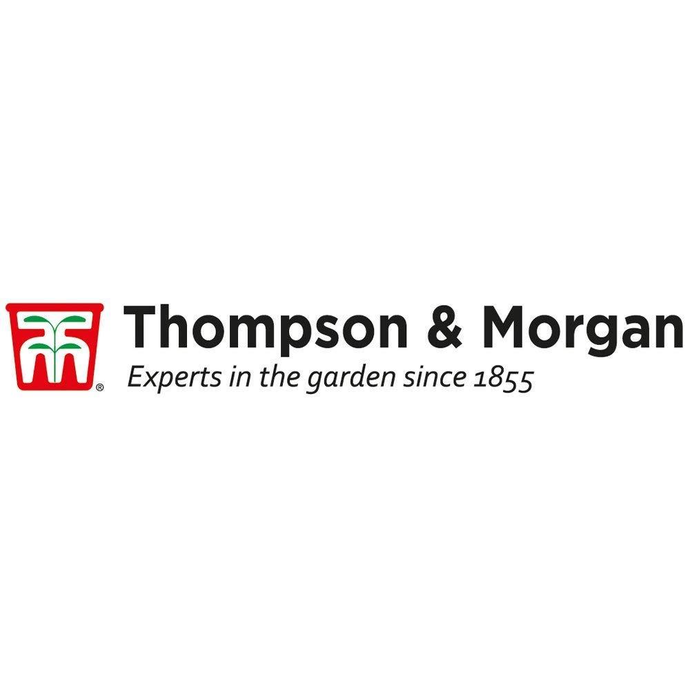 Thompson & Morgan Cultivo Kits Regalo Cajas - Gourmet Cocina ...