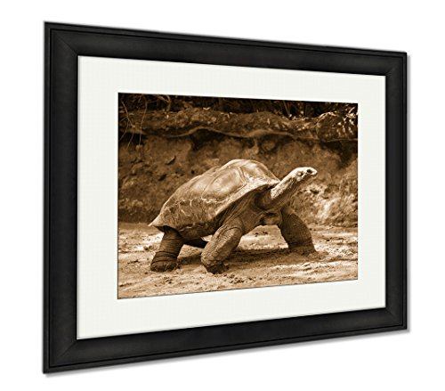 Ashley Framed Prints Giant Turtle, Wall Art Home Decoration, Sepia, 26x30 (frame size), Black Frame, - For Singapore Sale Tortoise
