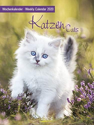 Wochenkalender Katzen - Kalender 2020 - Korsch-Verlag - Foto-Wochenkalender mit Platz zum Eintragen - 24 cm x 32 cm