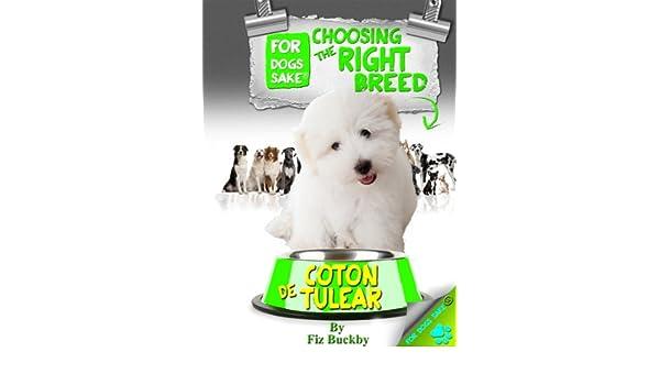 Choosing the Right Breed - Coton de Tulear
