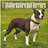 Staffordshire Bull Terriers Calendar (Multilingual Edition)