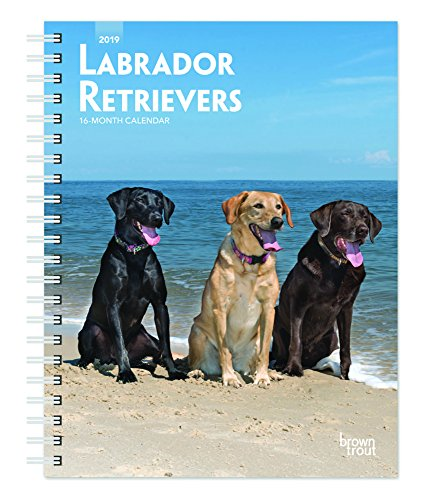 Labrador Retrievers 2019 6 x 7.75 Inch Weekly Engagement Calendar, Animals Dog Breeds Retriever (Multilingual Edition)