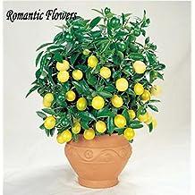 50 Seeds Lemon Seeds,Indoor Outdoor Bonsai Seeds, Edible Yellow Lemon Tree Seeds , Organic Food