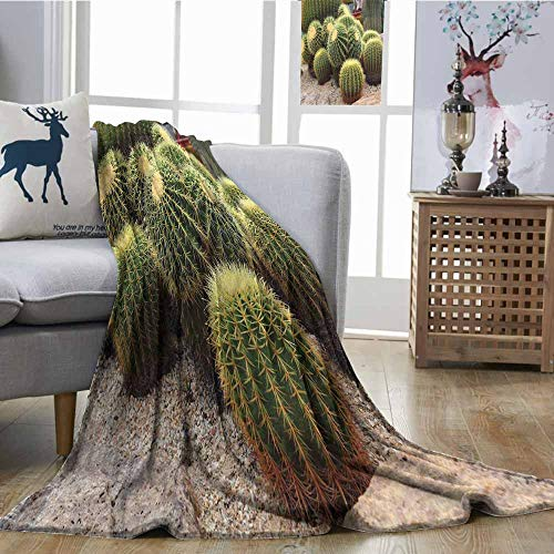 SONGDAYONE Home Blanket Cactus Easy to Care Golden Barrels Cactaceae Family Desert Succulent Indigenous Foliage Green Mustard Pale Brown W54 xL72
