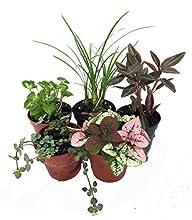 Terrarium & Fairy Garden Plants – 5 Plants in 2″ pots