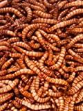 Giant Mealworms - Jumbo Mealworms for Feeding Reptiles, Chickens, Fish (1000)
