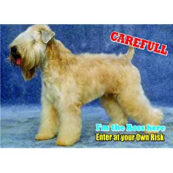 Attention - Beware / Fun Sign Dog Soft-Coated Wheaten Terrier Dog for your home or house SF2146 Size A5