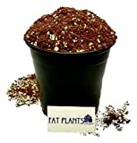 Fat Plants San Diego Succulent Soil, 2 quart