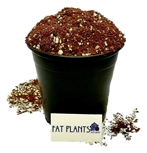 Fat Plants San Diego Premium Organic Cacti and Succulent Soil