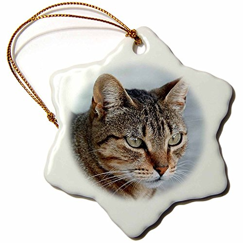 Taiche Acrylic Art Tabby Cat Portrait Snowflake Porcelain Ornament, 3-Inch