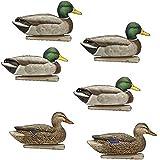 Avian X Top Flight Duck Open Water Mallard Decoy (6 Pack), Green