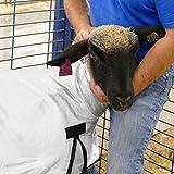 Rural365 Sheep Cover, Show Lamb Blanket 1-Pack