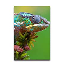 Colorful Lizard Art Print Customized & Personalized 20x30 Inch Poster