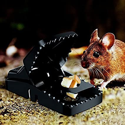 0d1f26fb2a3 Rat Mice Traps That Work Humane Snap Rodent Killer(12Pack) Effective and  Sensitive Mouse Catcher Buyplus Mouse Trap ...