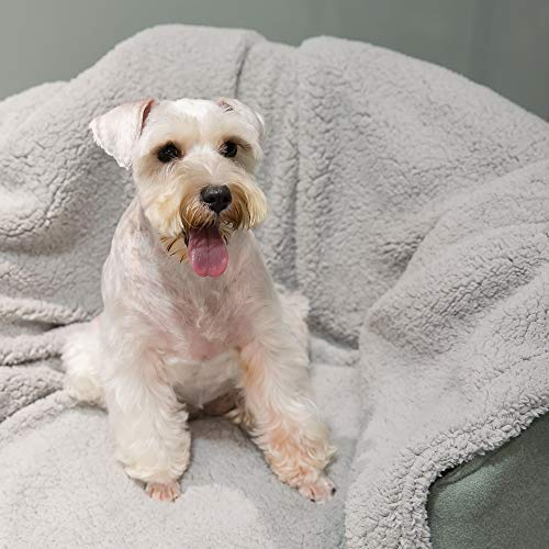 Allisandro [Upgrade Double Layer] Pet Premium Throw Blanket for Dog Cat Puppy Kitten Super Soft Fleece Velvet Four Color Three Size 39'' X 31'' Light Grey by Allisandro (Image #6)