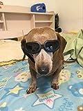 Enjoying Fashion Anti-ultraviolet Sunglasses Waterproof Pet Sunglasses For Cat or Small Dogs - Black