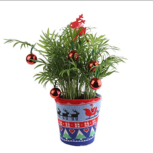Ultimate Decorated Tree (Costa Farms Live Tacky Florida Christmas Palm Tree in Ugly Christmas Sweater Planter, 14-Inches Tall, Fresh From Our Farm, Great as Holiday Gift or Christmas Decoration)