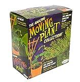 DuneCraft Active Plants - Dinosaur Plant, Sensitive Plant - Ages 4+