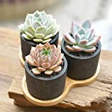 Nattol Modern Design 2.75 Inch Mini Black Cylinder Cement Succulents Container/Cactus Planter Pot with a Removable Bamboo Saucer Tray, Set of 3 (Black)
