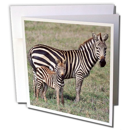 3dRose Zebra with Newborn Foal, Tanzania Africa - NA02 DNO0366 - David Northcott - Greeting Cards, 6 x 6 inches, set of 12 (gc_83921_2)