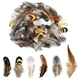 Best Feathers - 6 Styles of Natural Pheasant Feathers 180 Pcs Review