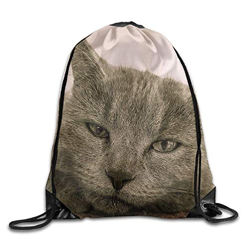 Cute-gray-cat-front-view-face 1920x1200 Thanksgiving Unisex Gym Drawstring Shoulder Bag Backpack String Bags for $<!--$12.55-->