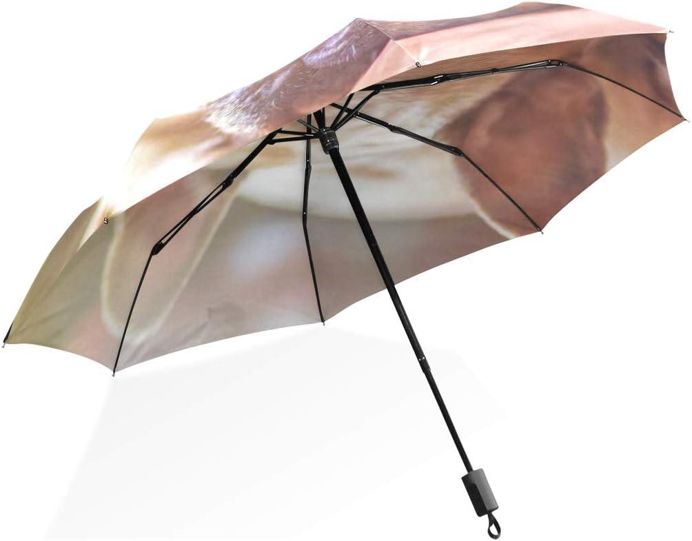 Isaoa Automatique Voyage Parapluie Pliable Compact Parapluie Bulldog /œil Vous Coupe-Vent Ultra l/éger Protection UV Parapluie pour Homme ou Femme