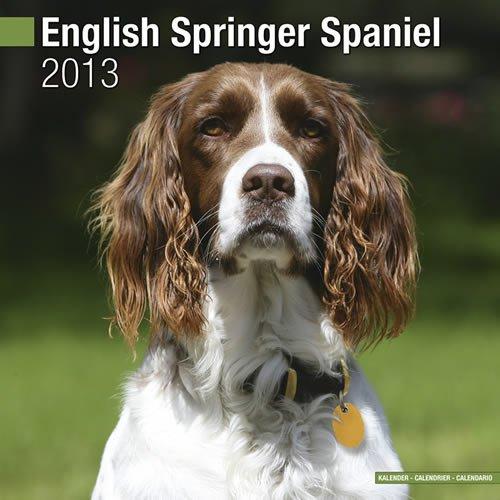 Spaniel 2013 Calendar - English Springer Spaniel (Euro) 2013 Wall Calendar #10036-13