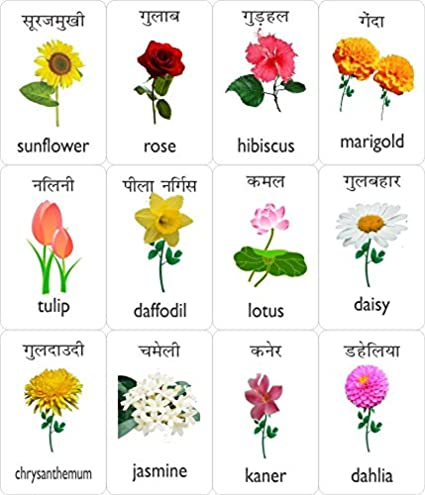 87 names of flowers in english flowers with names in