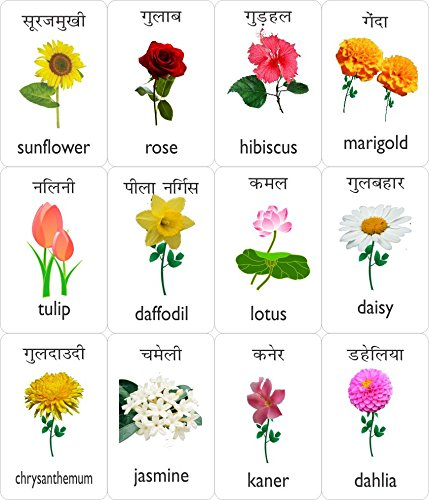 Buy Mfm Toys Flowers And Vegetables Bilingual Hindi English