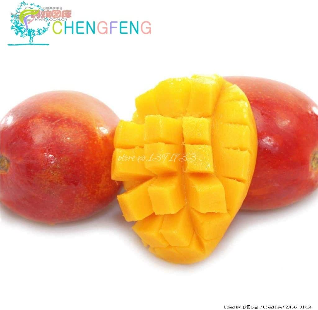 Elitely 1 St/ück//Beutel Mango Samen Mini Mango Samen Bio Erbst/ück Obst Samen Topf Samen f/ür Haus Garten Samen ES f/ür Sa 9