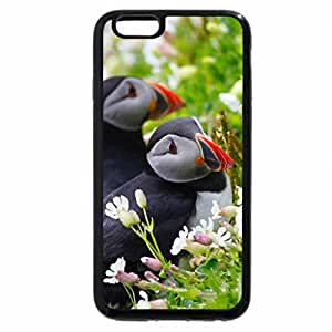 iPhone 6S / iPhone 6 Case (Black) Two Red Bill Birds