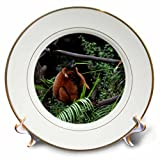 3dRose cp_178563_1 Red Ruffed Lemur Barking Animal-Porcelain Plate, 8-Inch