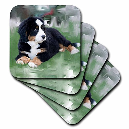 3dRose CST_4038_3 Bernese Mountain Dog-Ceramic Tile Coasters, Set of 4