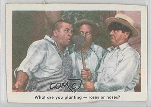 What are your planting -- roses or noses? COMC REVIEWED Poor (Trading Card) 1959 Fleer The 3 Stooges - [Base] #69 (What Planting)