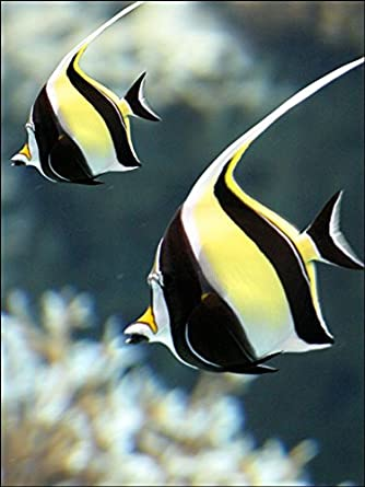 A4 Size Angelfish Birthday Cake Toppers Decorations On Edible Rice