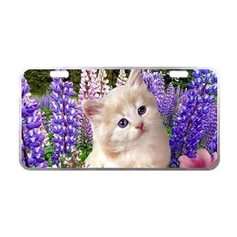 """6.1 """"x 11.8"""" plata Trim gatos cesta de fresas gatitos de licencia Placa"""