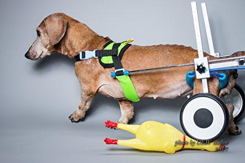 Adjustable Dog Pet Wheelchair, Hind Legs Rehabilitation, 7 Sizes, Dog Cart,Wheels (XS-LW for Corgi,...