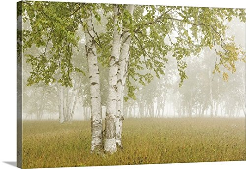 Susan Dykstra Premium Thick Wrap Canvas Wall Art Print Entitled Birch Trees In The Fog  Thunder Bay  Ontario  Canada