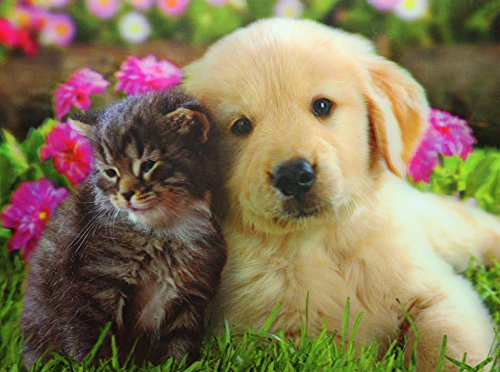 KITTEN & PUPPY Optical Illusions-HOLOGRAM 3D IMAGES-LENTICULAR - Images Frames Optical