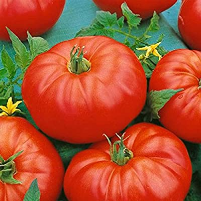 Tomato Garden Seeds - Beefmaster Hybrid - Non-GMO, Vegetable Gardening Seed - Mountain Valley Seeds