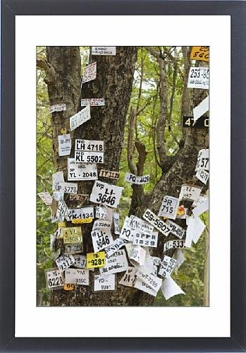 Framed Print of Vehicle numbers of pilgrims pinned to a tree in this sacred town, popular with