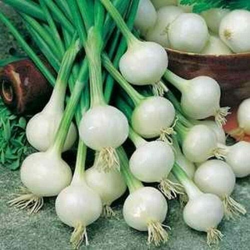 Onion - Barletta - Cocktail Onions - Salads, kabobs, or Pickling (24+ Seeds) AKE -