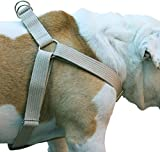 Cotton Web Adjustable Dog Step-in Harness 4 Sizes Beige (XLarge: 21''-37'' Chest; 1.2'' Wide)
