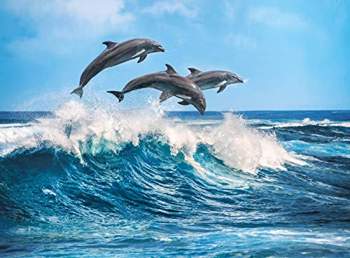 (Dolphins, Animals Jigsaw Puzzle, Collection, 500 Pieces)